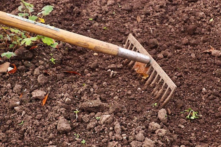Na co zwracać uwagę przy zakładaniu ogrodu?